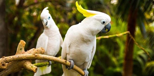 Nomes divertidos para Papagaios