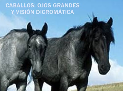 ojos-caballos