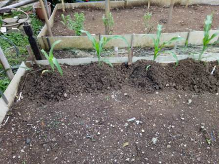 kebun sayur yodha anindita gambar 6