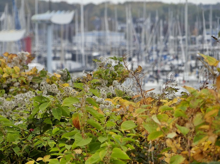 KIEL schilksee, Yachthafen,