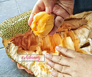 Buah-buahan tempatan | Raja buah dan angkatannya di rumah untuk dinikmati