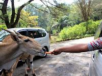 Daftar Kebun Binatang di Pulau Jawa yang Perlu Kamu Kunjungi Saat Liburan Nanti
