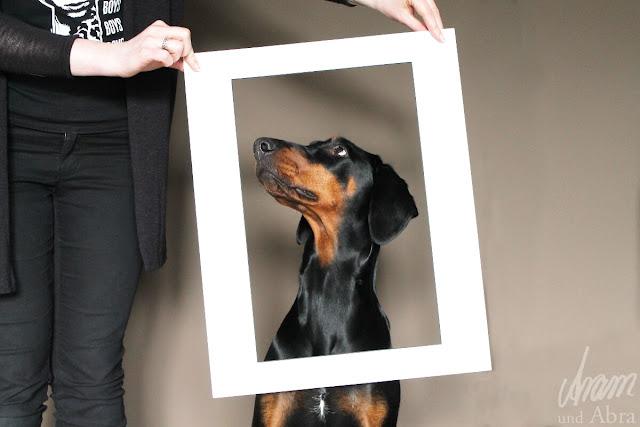 Tierportraits, Zeichnungen von Hunden, Illustrationen - Aram und Abra