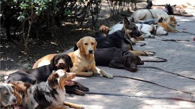Cinco perros dieron positivo de coronavirus en México