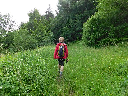Szlak wprowadza do lasu porastającego stoki Żurawnicy.