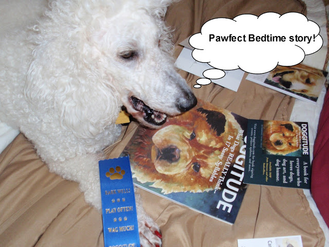 Poodle looking at the #Doggitude book -carmapoodale.com