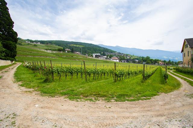 Vigne-Abbazia di Novacella