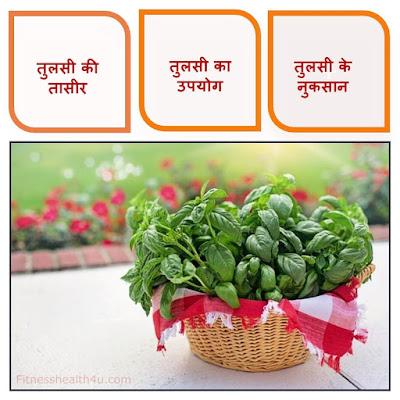 तुलसी खाने के फायदे और नुकसान | Benefits of basil in hindi