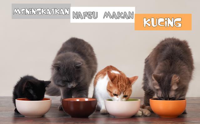 Nafsu Makan Kucing