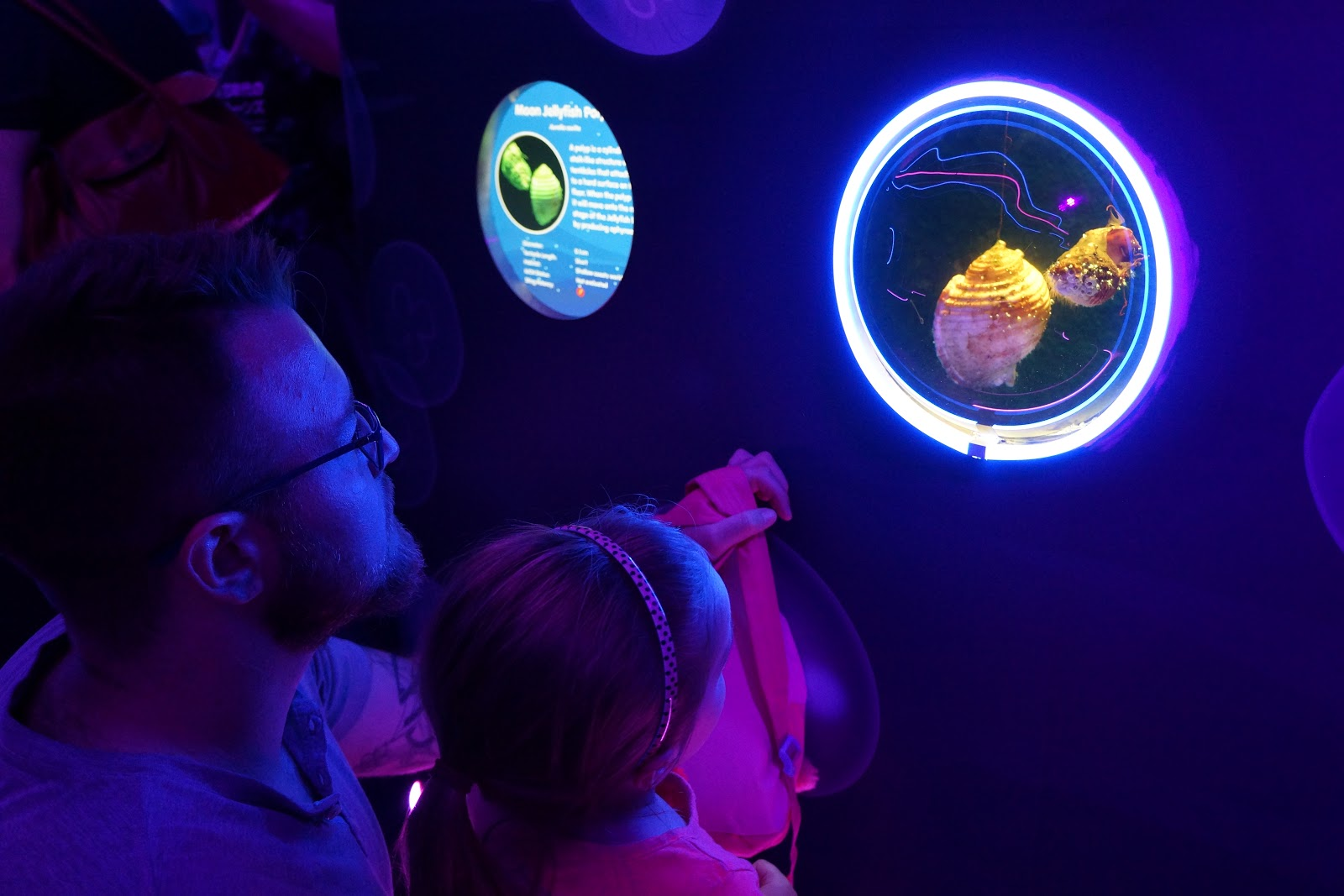 dad and daughter watching jellyfish