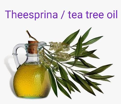 حصريا  الطرق الصحيحة لعمل زيت شجرة الشاي بالمنزل وبأقل التكاليف ٢٠١٩