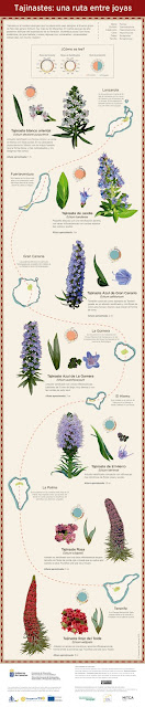Infografía de la ruta de las joyas de los tajinastes