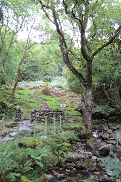 A stream in woodland with a path of stone steps leading uphill.