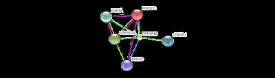 Gene PPP1R1B