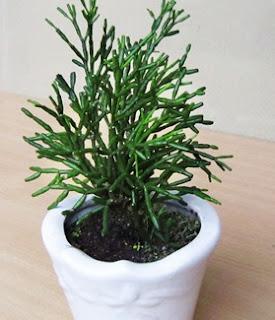 Cây cỏ gạc nai là cây gì? có tác dụng gì? ý nghĩa gì?