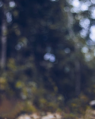 Bokeh Blur Nature Background Free Stock