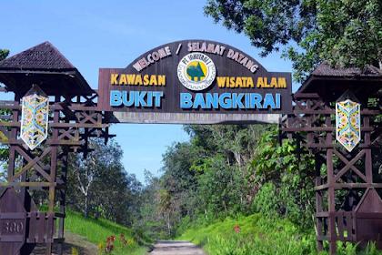 Berpetualang Seru di Wisata Alam Bukit Bangkirai