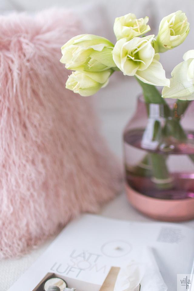 amaryllis, pastell, interior, sisutus, joulu