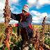 CHINA: SALUDA 15 AÑOS DE EXPORTACIÓN DE MANGO PERUANO SIN PLAGAS
