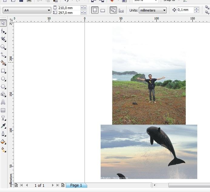 Cara Edit Foto Ada Ikan Hiu Terbang di CorelDRAW | Tukang ...
