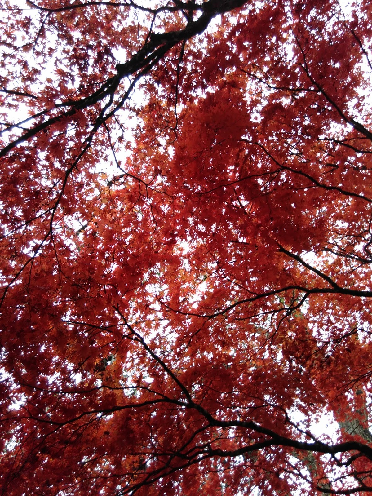 Autumn Leaves by E