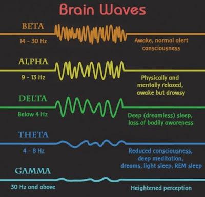 Tìm hiểu về Biểu đồ các loại sóng não: Alpha, Beta, Delta, Theta, Gamma ~  Sunflower 247