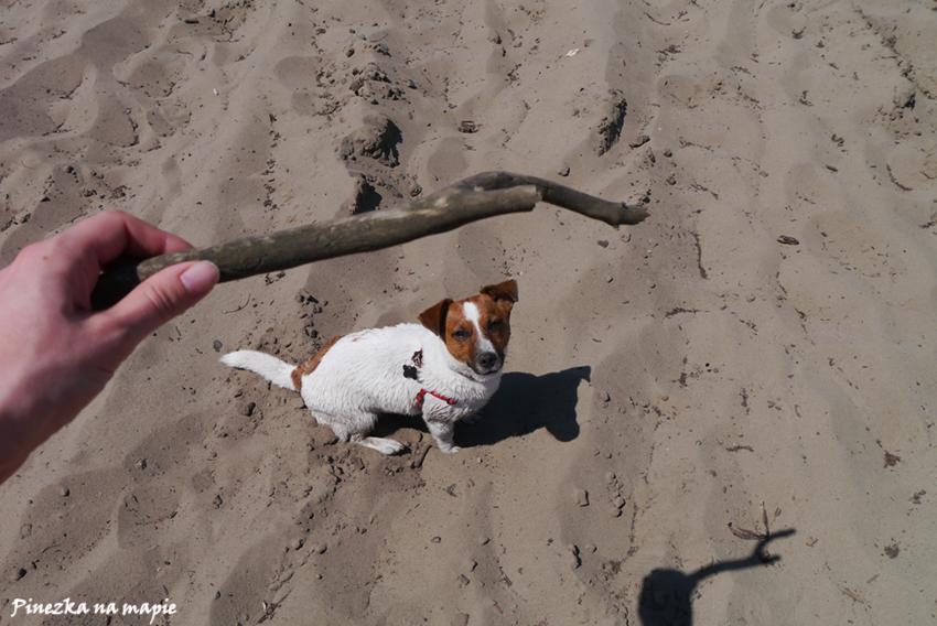 Pies na Pustyni Błędowskiej