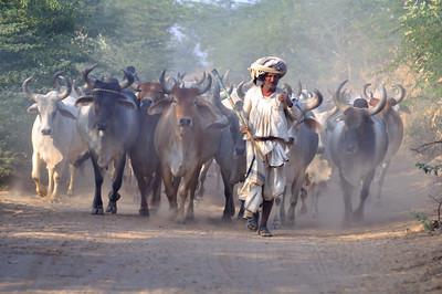 Akwa Ibom govt reacts to herdsmen attack