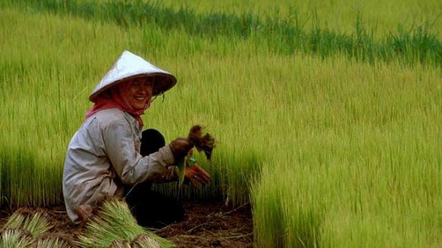 Tingkatkan Penjualan Hasil Tani, Petani Diberikan Pelatihan Digital Marketing