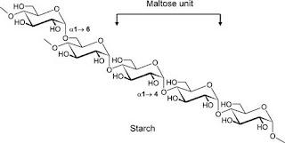 molecular structure of starch
