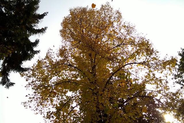 bambini osservano foglie che cadono