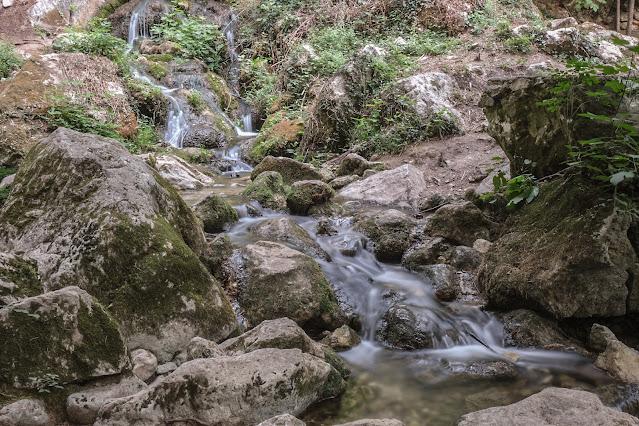Bosco degli Zappini