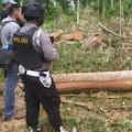 9 Tersangka Penebangan Pohon Liar di Kawasan Rigester 38 Gunung Balak dan Way Hui di Amankan Polosi