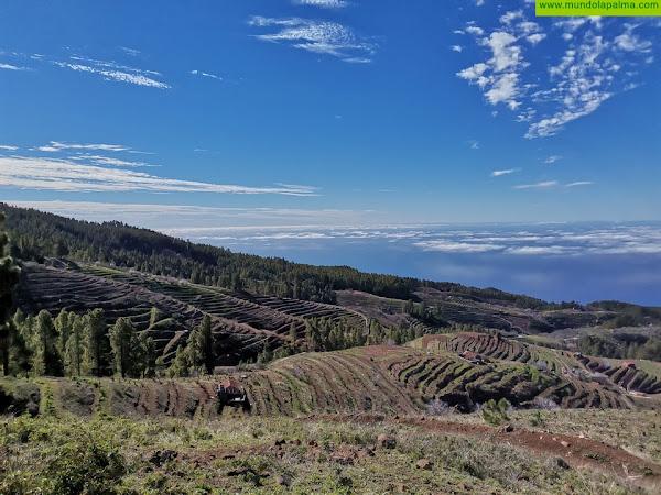 La Mesa de La Mujer Rural promueve entre bodegas y viticultores un escrito solicitando al Gobierno de Canarias la protección de los viñedos del norte