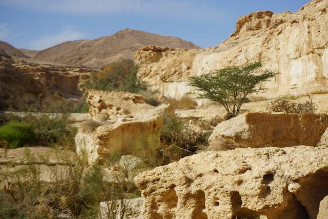 שיטה במדבר