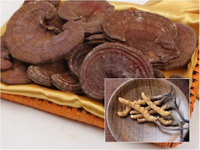 Dùng nấm linh chi kết hợp với đông trùng hạ thảo được không?