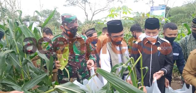 Dandim 0119/BM Bersama  Bupati Panen Jagung Perdana Milik BUMK