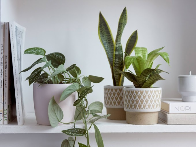 How to Take Care of Houseplants during winters?