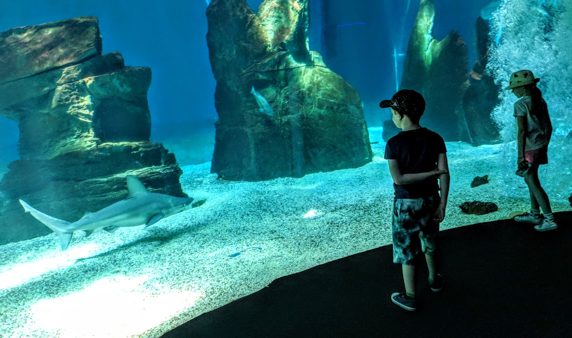 How to spend a weekend in Genoa with kids - Genoa aquarium shark tank