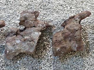 Titanossauro, Mendoza, Museo Moyano de Mendoza
