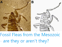 https://sciencythoughts.blogspot.com/2016/01/fossil-fleas-from-mesozoic-are-they-or.html