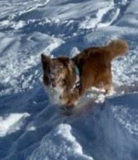 eduquer chien haute savoie annecy ugine thones