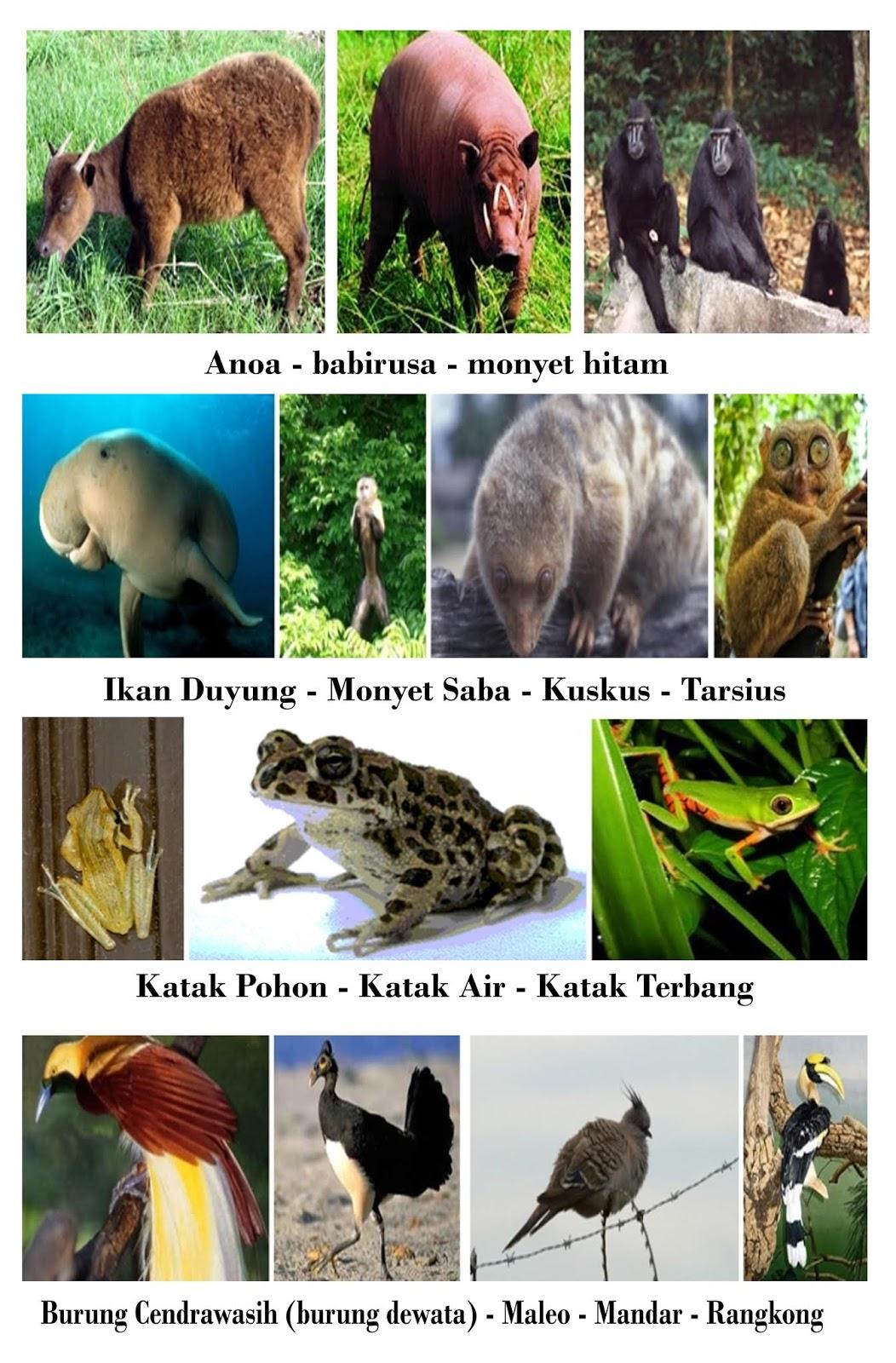 Contoh Fauna Peralihan : contoh, fauna, peralihan, Gambar, Fauna, Peralihan