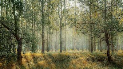 Der Wald mein Freund - Gedicht von Christine Spranger