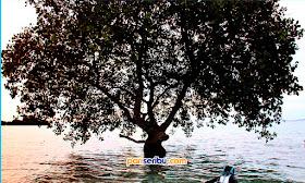 wisata pulau pari