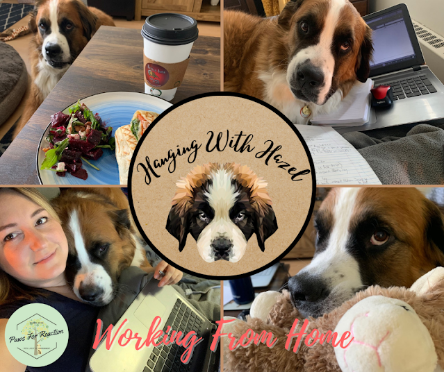 Hanging with Hazel the Saint Bernese dog: The ups and downs of working from home