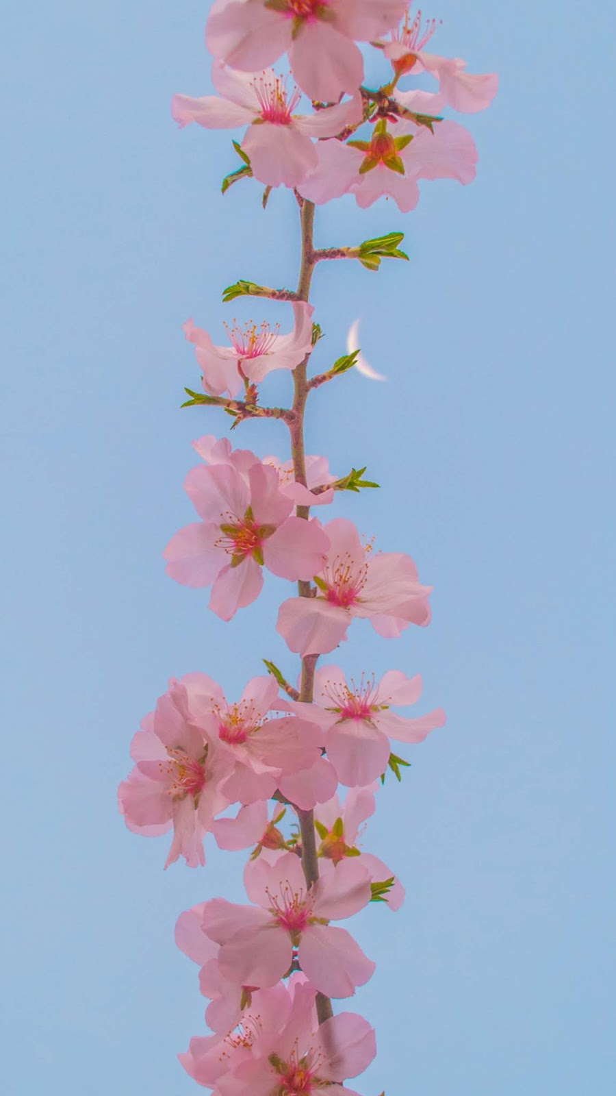 Aesthetic flower under the blue sky