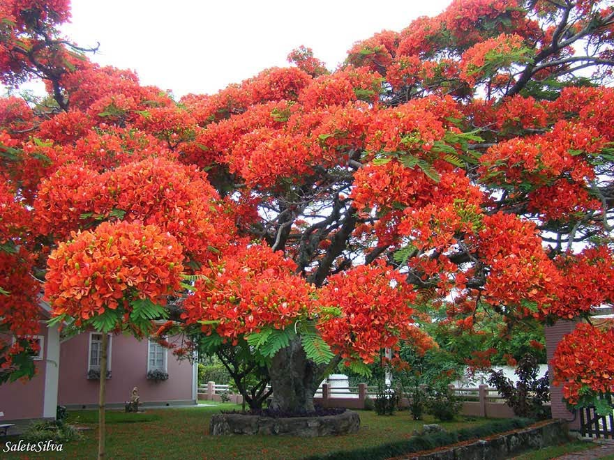 #8. This wild tree in Brazil - 16 Of The Most Magnificent Trees In The World.