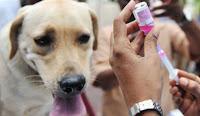 Kasus Rabies Kian Marak di Kabupaten Bima, Dinas Minta Tambahan Alokasi Anggaran