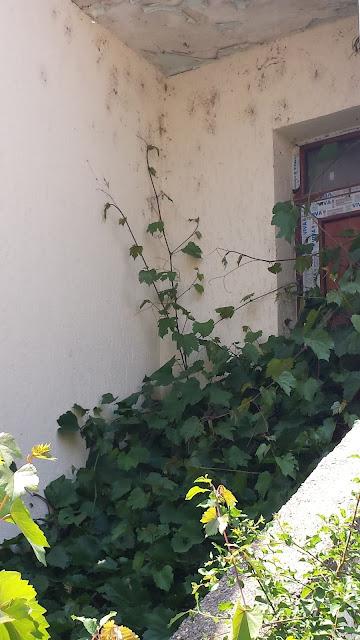 Grapevine, Jungle, Neglected Yambol, Home,